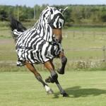 Buzz-Off Zebra
