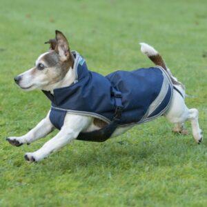 Freedom Dog Rug
