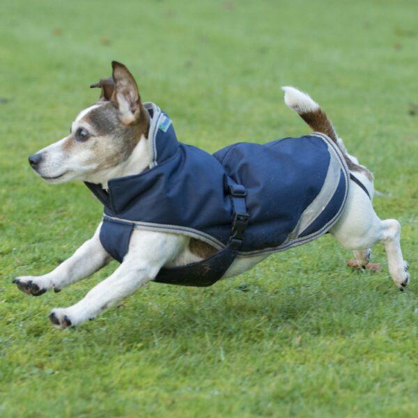 Dog On The Rug: Freedom Dog Rug 300g