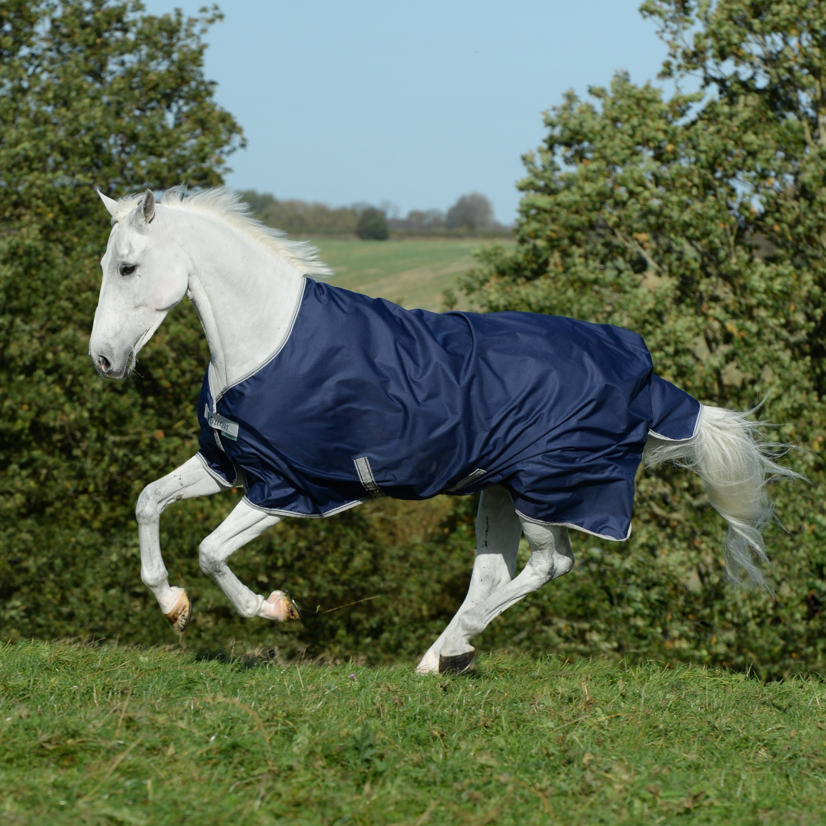 Clearance Turnout Rugs Archives Bucas