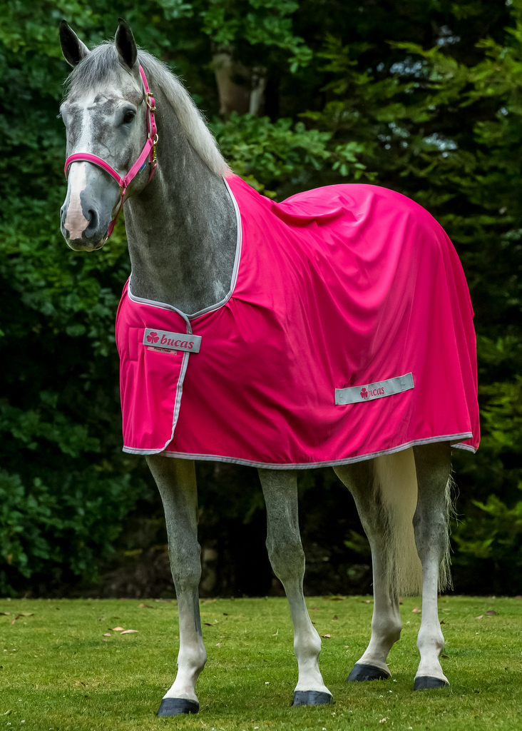 Power Cooler Pony Sizes Only Bucas