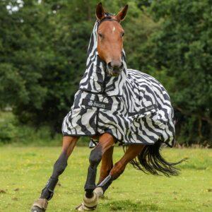 Sweet-Itch Zebra