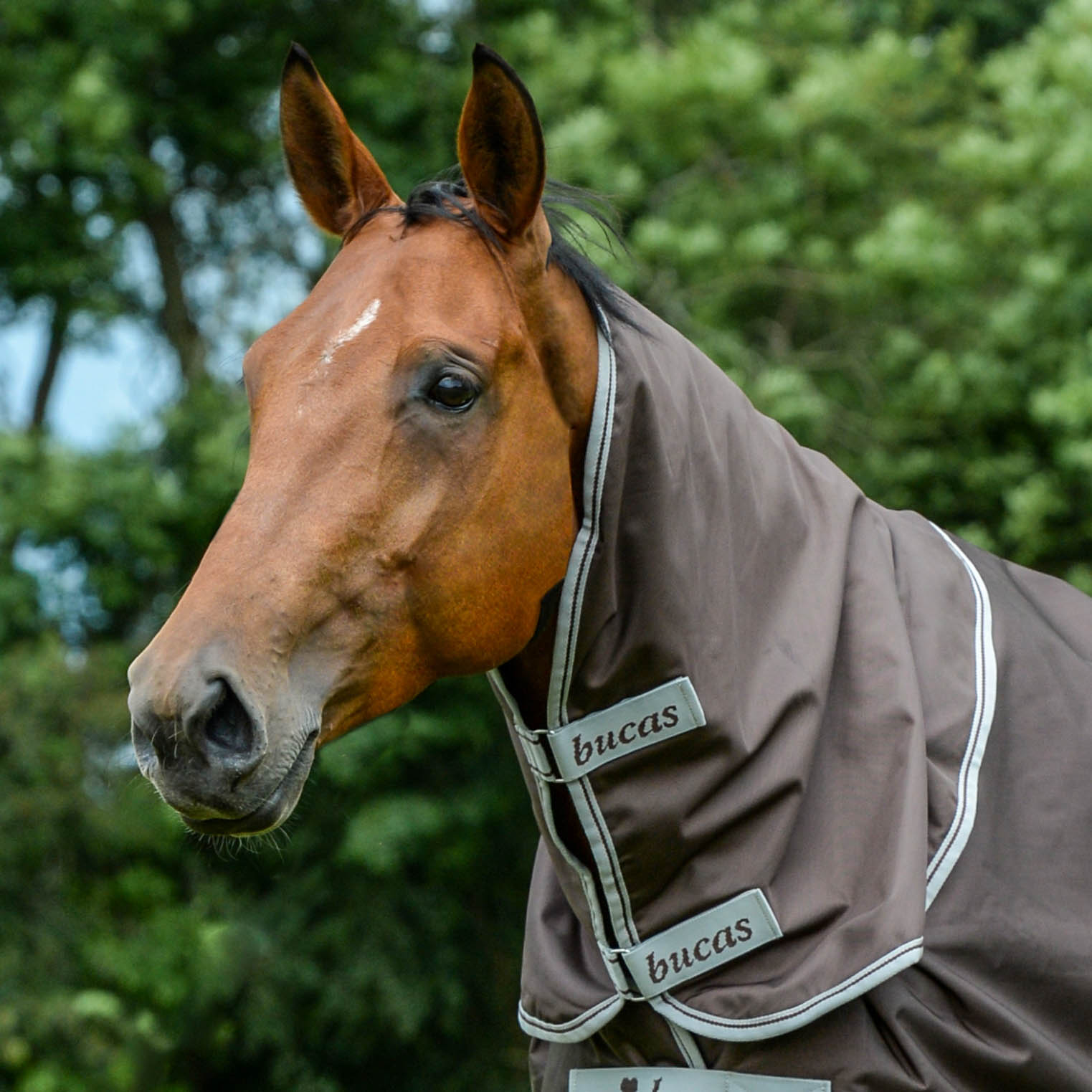 Turnout Rugs - Combi Neck